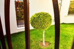 Höstbild, trädgård, litet grönt träd Arkivfoto
