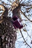höstbirdhousen låter vara treerisyellow Fotografering för Bildbyråer