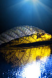 Höstblad i magiskt ljus Arkivfoton