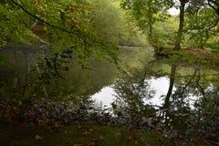 Höstblad i skogen norr London Arkivfoto
