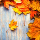 Höstblad på bästa sikt för blå wood bakgrund Arkivbilder