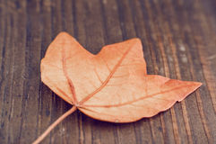 Höstblad på den wood bakgrundscloseupen Arkivfoton