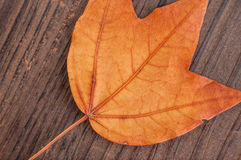 Höstblad på den wood bakgrundscloseupen Arkivfoto