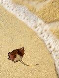 Höstblad på sand Royaltyfria Bilder