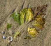 Höstblad på sand Royaltyfria Foton
