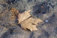 Höstblad på sand Royaltyfri Foto