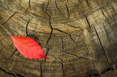 Höstblad på trädstubbe Arkivfoton