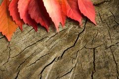 Höstblad på trädstubbe Arkivbilder