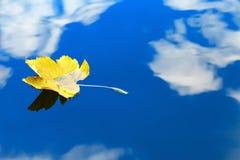 Höstblad som svävar på vattenreflexion av blå himmel- och vitmolnen Arkivfoto