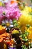 höstblommor Royaltyfria Foton