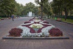 Höstblommor på en säng i Kharkiv Shevchenko Park smyckar citen Arkivfoton