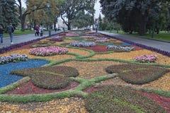 Höstblommor på en säng i Kharkiv Shevchenko Park smyckar citen Fotografering för Bildbyråer