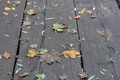 höstbotanisk trädgård Arkivfoton