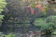 höstbotanisk trädgård Arkivfoto