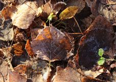 Höstbruntsidor på gräset royaltyfri bild