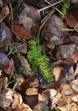 Höstbruntsidor på gräset royaltyfri foto
