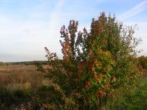 Höstbuskar vänder gult, fält, och ängar vissnar Arkivbilder