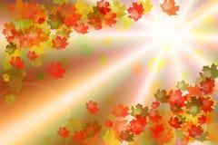 höstcollage Royaltyfria Bilder