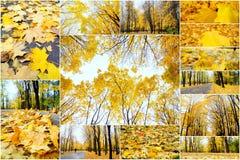 Höstcollage som visar olika höstbilder, färgrik bakgrund av stupade höstsidor fotografering för bildbyråer