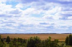 Höstcornfieldkoloni och stora moln i himlen royaltyfria bilder