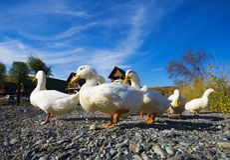 höstdagen duckar soligt fotografering för bildbyråer