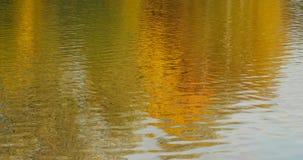 Höstdagsljuslandskap reflekterat i vatten lager videofilmer