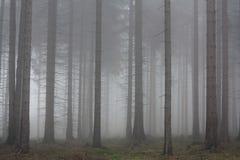 Höstdimma i den prydliga skogen Fotografering för Bildbyråer