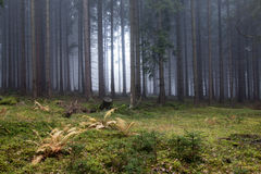 Höstdimma i den prydliga skogen Royaltyfria Bilder