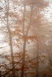 Höstdimma i skogen Arkivbilder