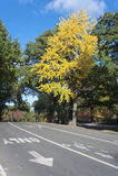 Hösteftermiddag i Central Park Royaltyfria Bilder