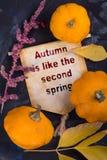 Hösten äger rum som den andra våren royaltyfri foto