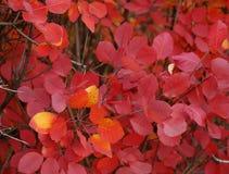 Hösten är en sagakonstnär som Autumn kan finna magiska färger Arkivfoton