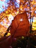 Hösten royaltyfria bilder