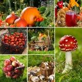 Hösten bär frukt collage Arkivbild