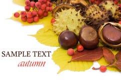 hösten bär fruktt leaves arkivfoto