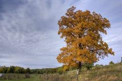 hösten betar Arkivfoton