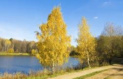 Hösten björkar near sjön Fotografering för Bildbyråer