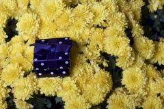 Hösten blommar i en kruka Gul chrysanthemum Därefter är en gåva i en fyrkantig ask arkivfoton