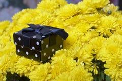 Hösten blommar i en kruka Gul chrysanthemum Därefter är en gåva i en fyrkantig ask royaltyfria bilder
