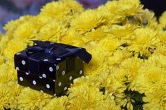 Hösten blommar i en kruka Gul chrysanthemum Därefter är en gåva i en fyrkantig ask royaltyfri foto