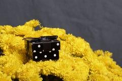 Hösten blommar i en kruka Gul chrysanthemum Därefter är en gåva i en fyrkantig ask på en grå färgbakgrund arkivfoto