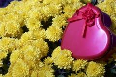 Hösten blommar i en kruka Gul chrysanthemum Därefter är en gåva i en tenn- ask i formen av en hjärta royaltyfria bilder