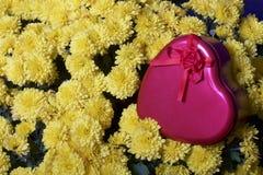Hösten blommar i en kruka Gul chrysanthemum Därefter är en gåva i en tenn- ask i formen av en hjärta arkivfoton