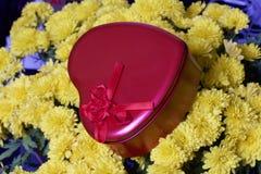 Hösten blommar i en kruka Gul chrysanthemum Därefter är en gåva i en tenn- ask i formen av en hjärta på en grå färgbakgrund arkivbild