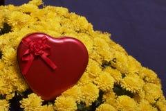 Hösten blommar i en kruka Gul chrysanthemum Därefter är en gåva i en tenn- ask i formen av en hjärta på en grå färgbakgrund arkivfoto