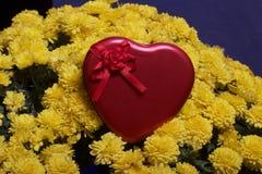 Hösten blommar i en kruka Gul chrysanthemum Därefter är en gåva i en tenn- ask i formen av en hjärta på en grå färgbakgrund royaltyfri fotografi