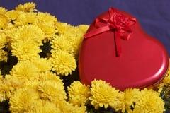 Hösten blommar i en kruka Gul chrysanthemum Därefter är en gåva i en tenn- ask i formen av en hjärta på en grå färgbakgrund royaltyfri bild