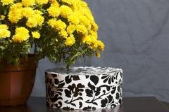 Hösten blommar i en kruka Gul chrysanthemum Nästa gåva i en kartong med en prydnad på en grå färgbakgrund arkivbilder