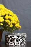 Hösten blommar i en kruka Gul chrysanthemum Nästa gåva i en kartong med en prydnad på en grå färgbakgrund royaltyfria foton