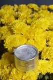 Hösten blommar i en kruka Gul chrysanthemum Nästa gåva i en silverask fotografering för bildbyråer